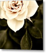 The Softest Rose Metal Print