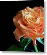 The Touch Of A Rose Metal Print by Tracy Hall