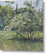 The Wild Apple Tree Metal Print