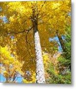 The Yellow Umbrella - Photograph Metal Print