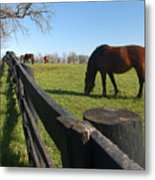 Thoroughbred Horses In Kentucky Pasture Metal Print