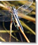 Three Dragonflies On One Reed Metal Print
