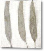 Three Eucalyptus Leaves Metal Print
