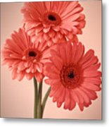 Three Gerberas 1 Metal Print
