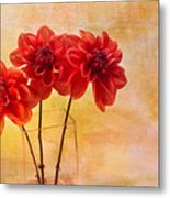 Three Orange Dahlias Metal Print by Rebecca Cozart