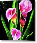 Three Pink Calla Lilies. Metal Print