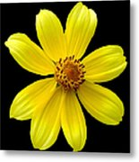 Tickseed Sunflower Metal Print