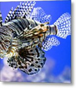 Tiger Fish Metal Print