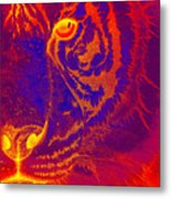 Tiger On Fire Metal Print