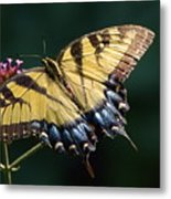 Tigress And Verbena Metal Print