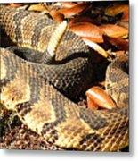 Timber Rattlesnake Horizontal Metal Print