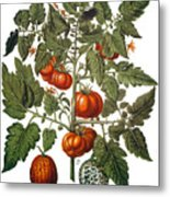 Tomato & Watermelon 1613 Metal Print