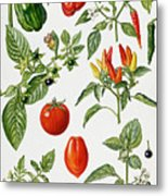 Tomatoes And Related Vegetables Metal Print by Elizabeth Rice