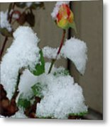 Too Soon Winter - Yellow Rose Metal Print
