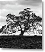 Tortue Oak Metal Print