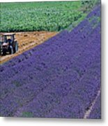 Tractor In A Lavender Field Metal Print