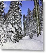 Trail Through Trees Metal Print by Garry Gay