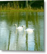 Tranquil Reflection Swans Metal Print