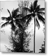 Tree Between The Trees Metal Print