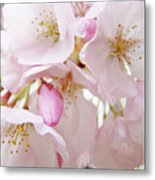Tree Blossoms Art Prints Canvas Pink Spring Blossoms Baslee Troutman Metal Print