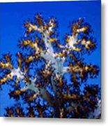 Tree Coral Metal Print