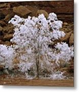 Tree During Winter Inversion Metal Print