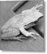 Tree Frog Up Late Metal Print