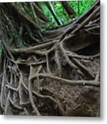 Tree From Manoa Falls Metal Print