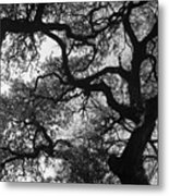 Tree Gazing Metal Print