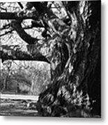 Tree I Metal Print