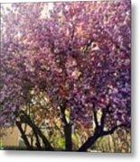 Tree In Pink Metal Print