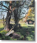 Trees Near Rhug. Metal Print by Harry Robertson