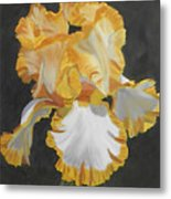 Trimmed In Yellow 2 Metal Print