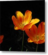 Triples Metal Print by Lois Bryan