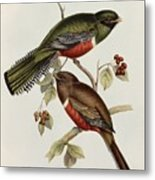 Trogon Collaris Metal Print by John Gould