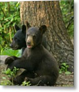 Trouble And More Trouble Metal Print by Gerry Sibell