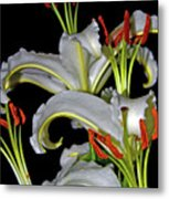 True Lilies Metal Print by Andy Za