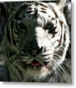 Tryptic Tiger Metal Print
