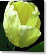 Tulip 0755 Metal Print