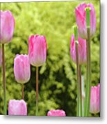 Tulip Garden Landscape Art Prints Pink Tulips Floral Baslee Troutman Metal Print