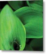 Tulip Leaves-1 Metal Print