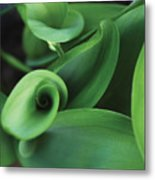 Tulip Leaves Metal Print