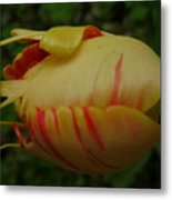 Tulip Or Sea Creature Metal Print