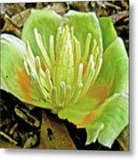 Tulip Poplar Flower - Liriodendron Tulipifera Metal Print