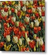 Tulips 1 Metal Print