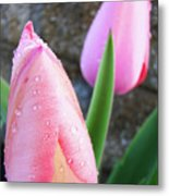 Tulips Artwork Pink Tulip Flowers Srping Florals Art Prints Baslee Troutman Metal Print