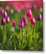 Tulips Dream Metal Print