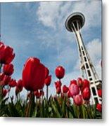 Tulips In Seattle H081 Metal Print