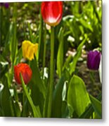 Tulips In The Garden Metal Print