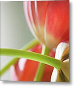 Tulips In The Morning Metal Print by Theresa Tahara